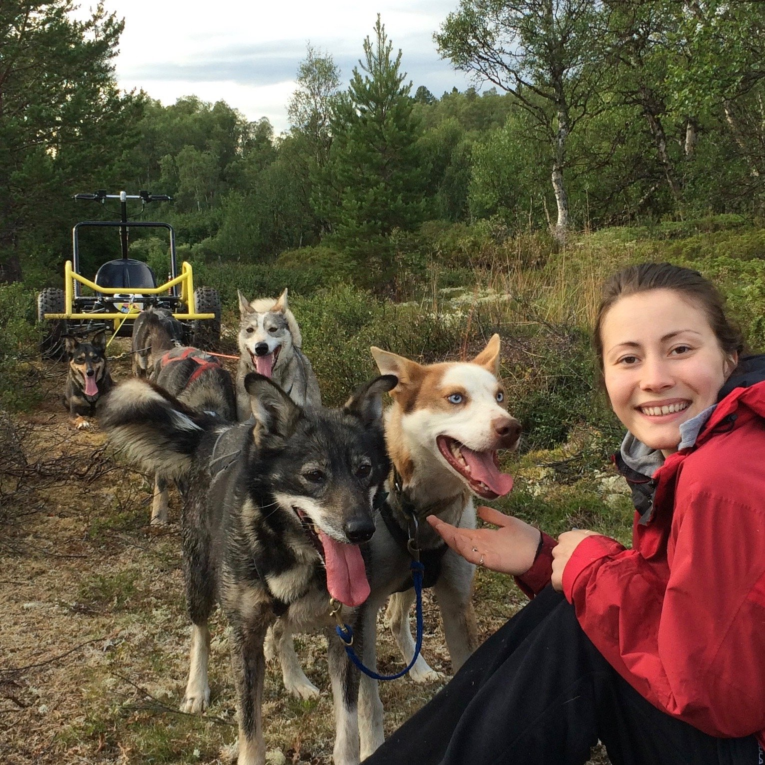 Summer activities huskies dogs hunde cart_tour