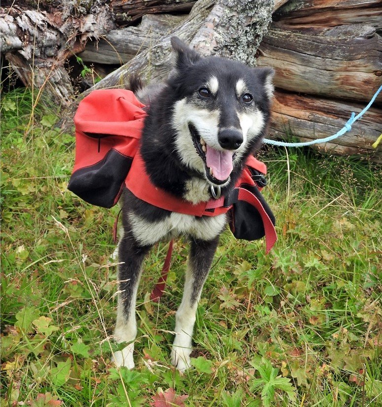Summer activities huskies dogs hunde hiking